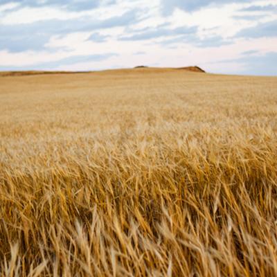 Ипотечен кредит за земеделска земя